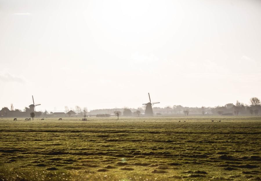 Wilgenrijk Omgeving Midden Delfland